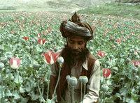Afghan poppy seed farmer (photo: AP)