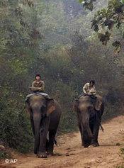 Mahouts on elephants in Laos (photo: AP/David Longstreath)