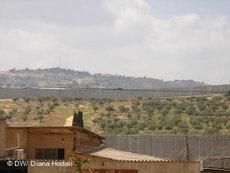 Olive grove near Bethlehem (photo: Diana Hodali/DW)