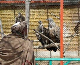 A Pashtun visitor to the zoo in Kabul (photo: Marian Brehmer)