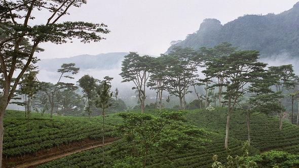 Tea plantation in Sri Lanka (photo: CC/Anjadorra)
