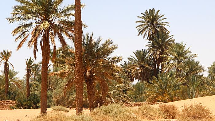 A oasis in the Arabian desert (photo: DW)