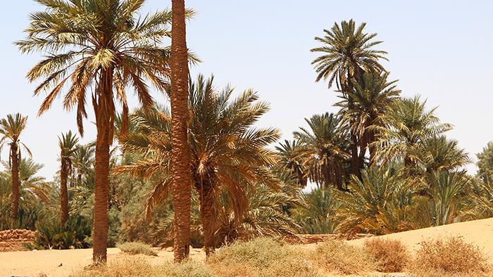 A oasis in the Arabian desert (photo: DW)