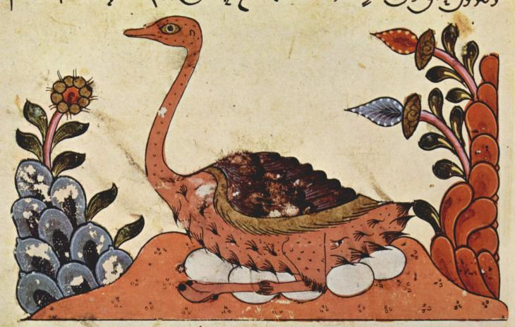 """Picture of an ostrich, Syrian illumination dating from sometime around 1335 from Al-Jahiz's """"Book of Animals"""" (source: Wikipedia)"""