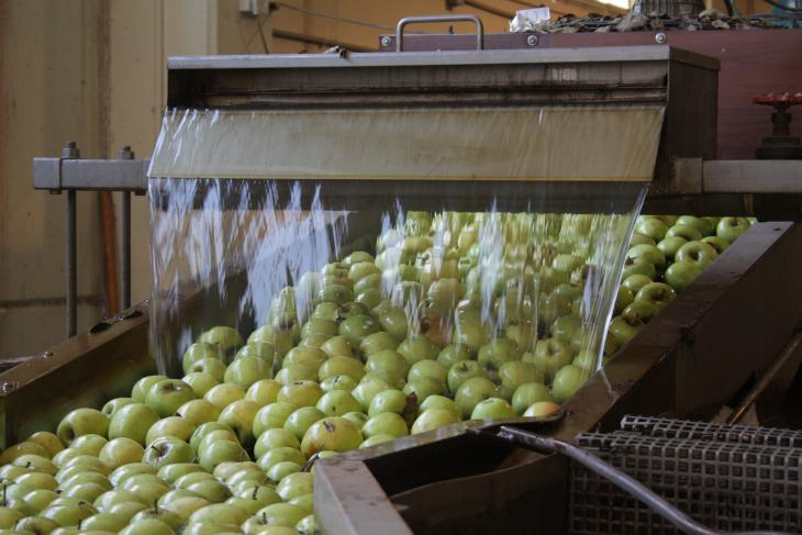 Apple processing plant, Golan (photo: Ylenia Gostoli)
