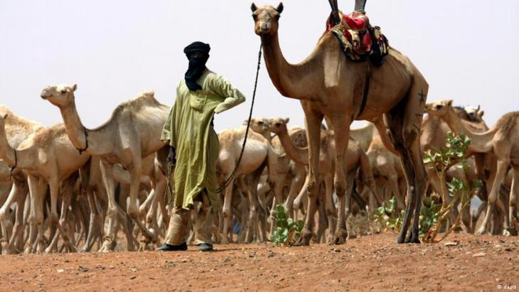 A Tuareg nomad with a herd of camels (photo: DAPD)