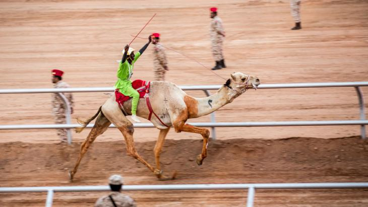 Winner of this year′s camel race at the Janadriyah Festival of Culture in Riyadh (photo: Michael Kappeler/dpa)