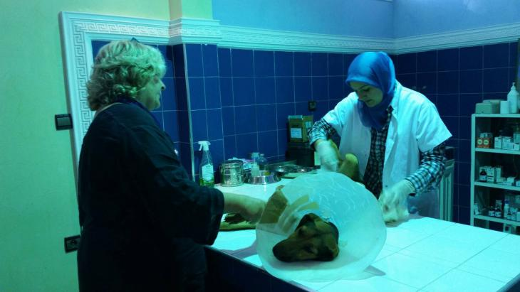 Dr. Amina Bouchfenj examines Inka, a sterilised bitch with complications (photo: Regina Keil-Sagawe)