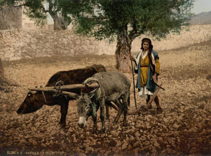Palestinian ploughing at the end of the nineteenth century