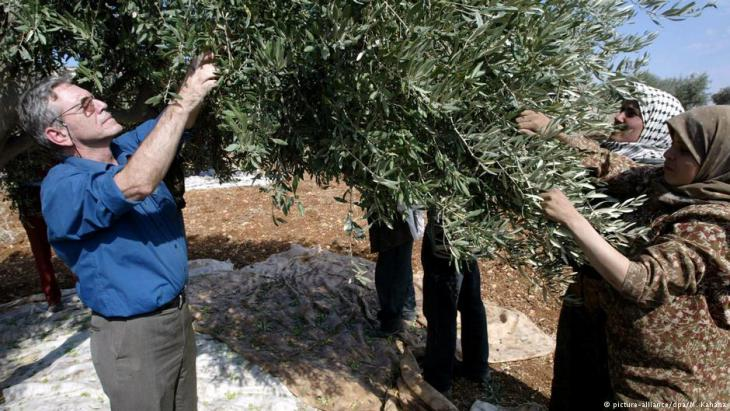 Amos Oz picks olives with Palestinian villagers in 2002 to protest against increasing violence from Jewish settlers (photo: picture-alliance/dpa/M. Kahana)