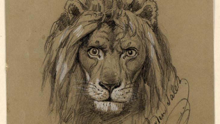 Study of a lion (image: © Lindenau-Museum Altenburg)