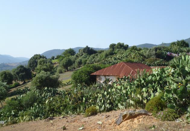 The village of Joujouka (photo: © Arian Fariborz)