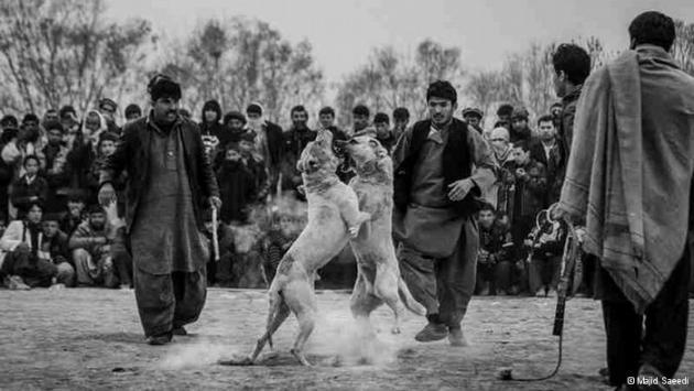 People watching an organised dog fight in Afghanistan (photo: Majid Saeedi)