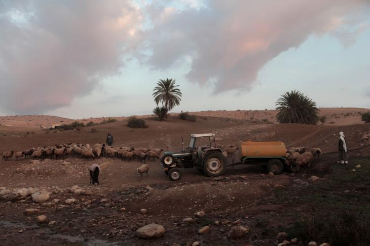 Palestinian Bedouins provide water for their sheep, Tubas, West Bank, October 2014 (photo: Mohammad Alhaj)