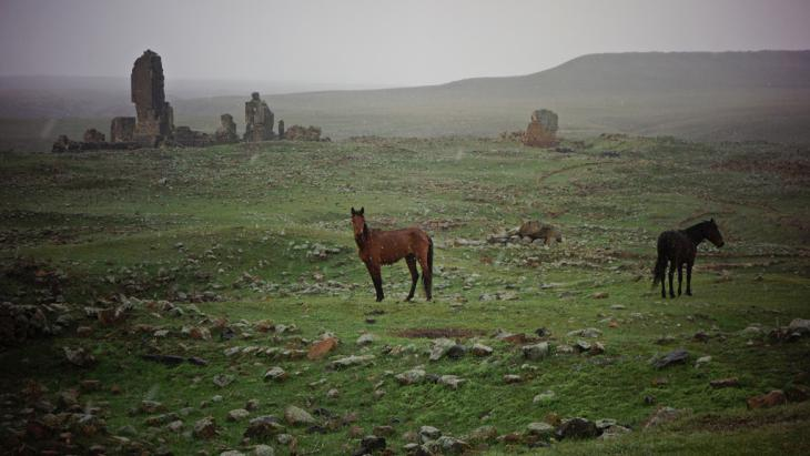 Wild horses grazing near the ruined city of Ani (photo: DW/F. Warwick)