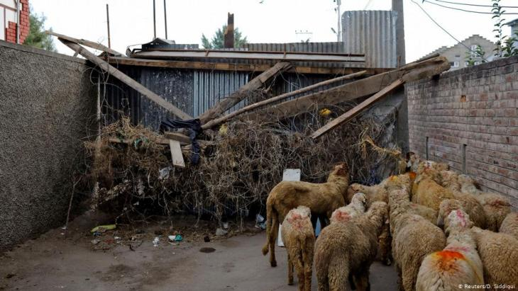 A herd of sheep wait to pass through a barricade set up by residents (photo: Reuters/D. Siddiqui)
