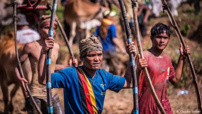 Pacu Jawi, traditional bull-racing on Sumatra (photo: Claudio Sieber)