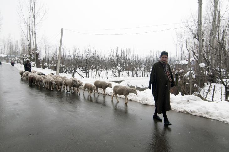A goatherd returning with his herd to the plains (photo: Sugato Mukherjee)