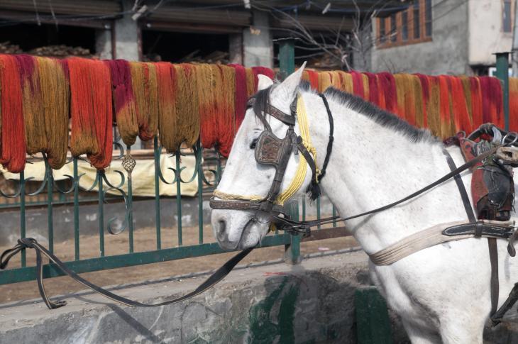 Yarns hung over the railings in Srinagar (photo: Sugato Mukherjee)