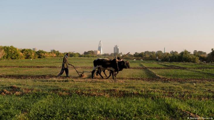 A farmer uses cows to plough a field on Tuti Island, Khartoum, Sudan, 11 February 2020 (photo: REUTERS/Zohra Bensemra)