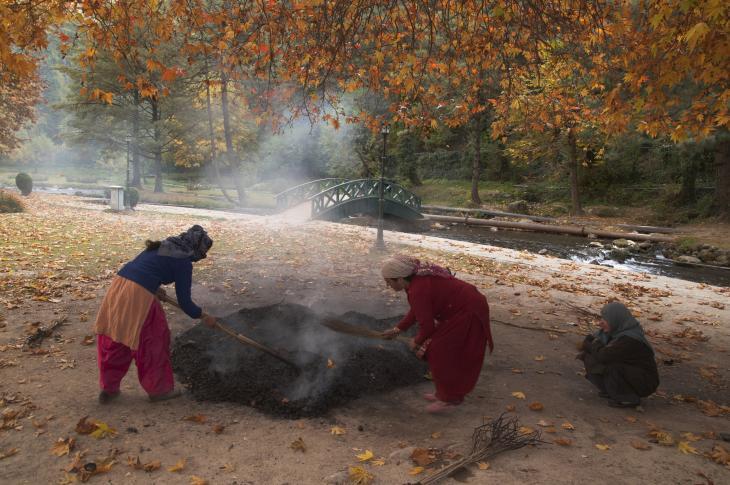 Village women in Kashmir collecting dry chinar leaves (photo: Sugato Mukherjee)