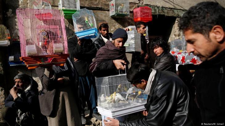 Bird vendors display canaries to buyers at Ka Faroshi bird market in Kabul, Afghanistan (photo: REUTERS/Mohammad Ismail)