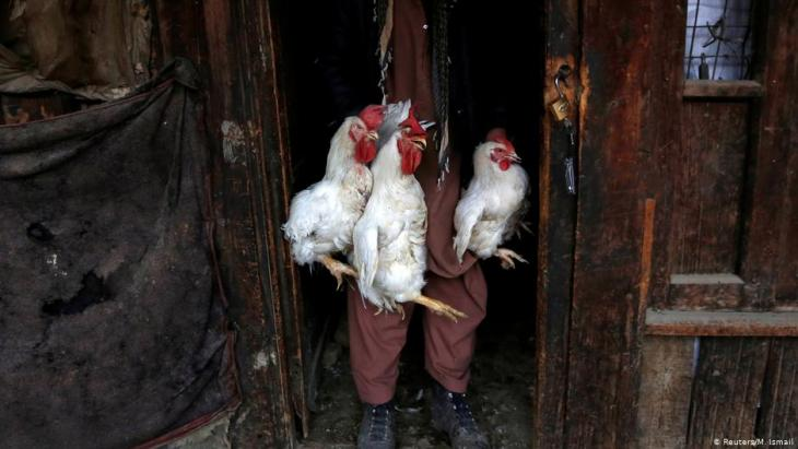 A man carries roosters for sale at Ka Faroshi bird market in Kabul, Afghanistan (photo: REUTERS/Mohammad Ismail)