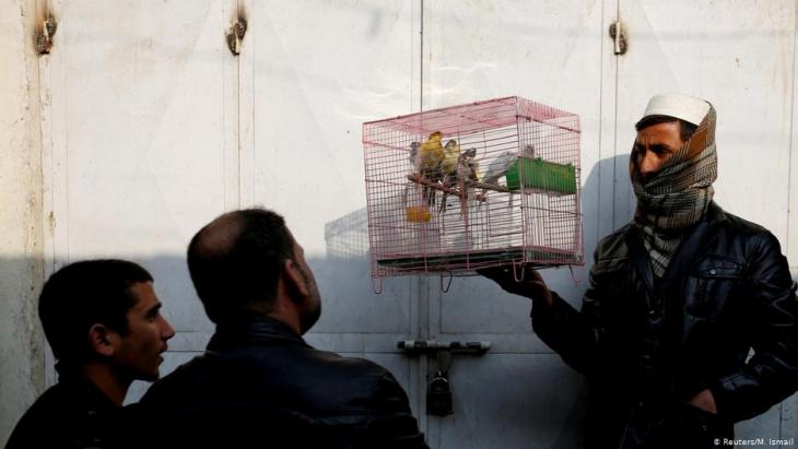 Afghan men look at birds in a cage at Ka Faroshi bird market in Kabul, Afghanistan (photo: REUTERS/Mohammad Ismail)