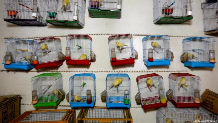 Canary cages hang inside a shop, for sale, at Ka Faroshi bird market in Kabul, Afghanistan (photo: REUTERS/Mohammad Ismail)