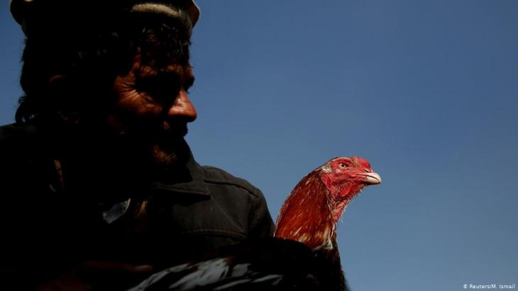 Sayed Mohammad Ali holds his rooster at Ka Faroshi bird market in Kabul, Afghanistan (photo: REUTERS/Mohammad Ismail)