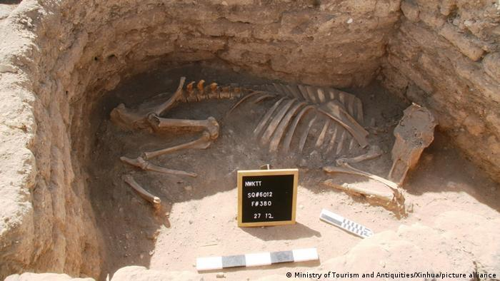 Animal skeleton surrounded by a mud brick wall in the lost city