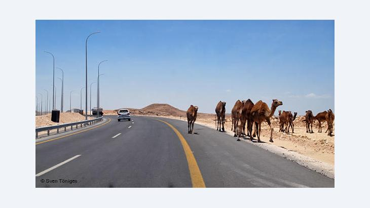 Camels on a highway in Oman (photo: Sven Töniges/DW)