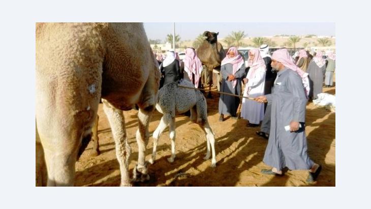 Camel market in Buraidah (photo: Rainer Hermann)