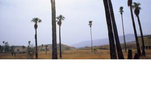 View of the island of Bakoora/Naharayim (photo: Claudia Mende)