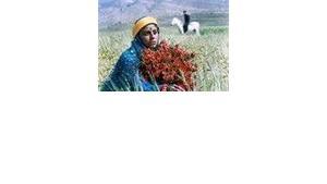"""Filmstill """"Gabbeh"""", by Mohsen Makhmalbaf (photo: Makhmalbaf Film House)"""