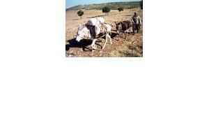 In Turkey, modern farming equipment is still rare (photo: AP)
