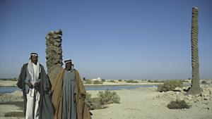 Ravaged land: Before war broke out between Iran and Iraq and the marshes were drained in the 1980s, groves of date palms flourished in southern Iraq. Where 30 million trees once stood there are now only about eight million.