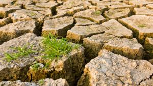 Symbolic image of climate change – cracked earth and grass (source: Colourbox)