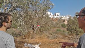 Two olive harvest volunteers look towards Modeiin Ilit, an Orthodox Jewish settlement built on Palestinian land (photo: DW/U. Schleicher)