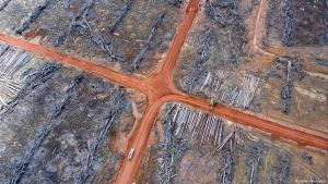 Rainforest deforestation on West Papua, Indonesia (source: Aidenvironment)