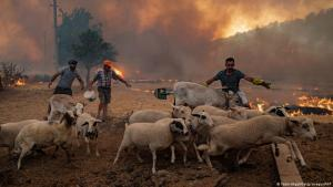 Farmers herding their livestock away from an approaching wildfire in Turkey (Yasin Akgul/Getty Images/AFP)