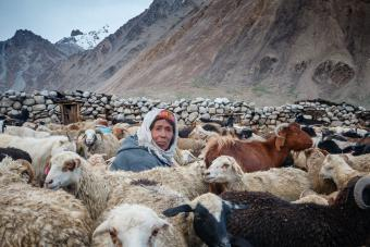 """A Wakhi shepherdess milks her cattle in a pen at the end of the day. She wears the """"kilt"""", a colourful embroidered Wakhi hat worn by the oldest. The days assume a monotonous rhythm, punctuated by the herding of sheep, milking and the making of traditional cheese and yak butter"""